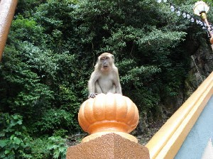 Monkey on the post